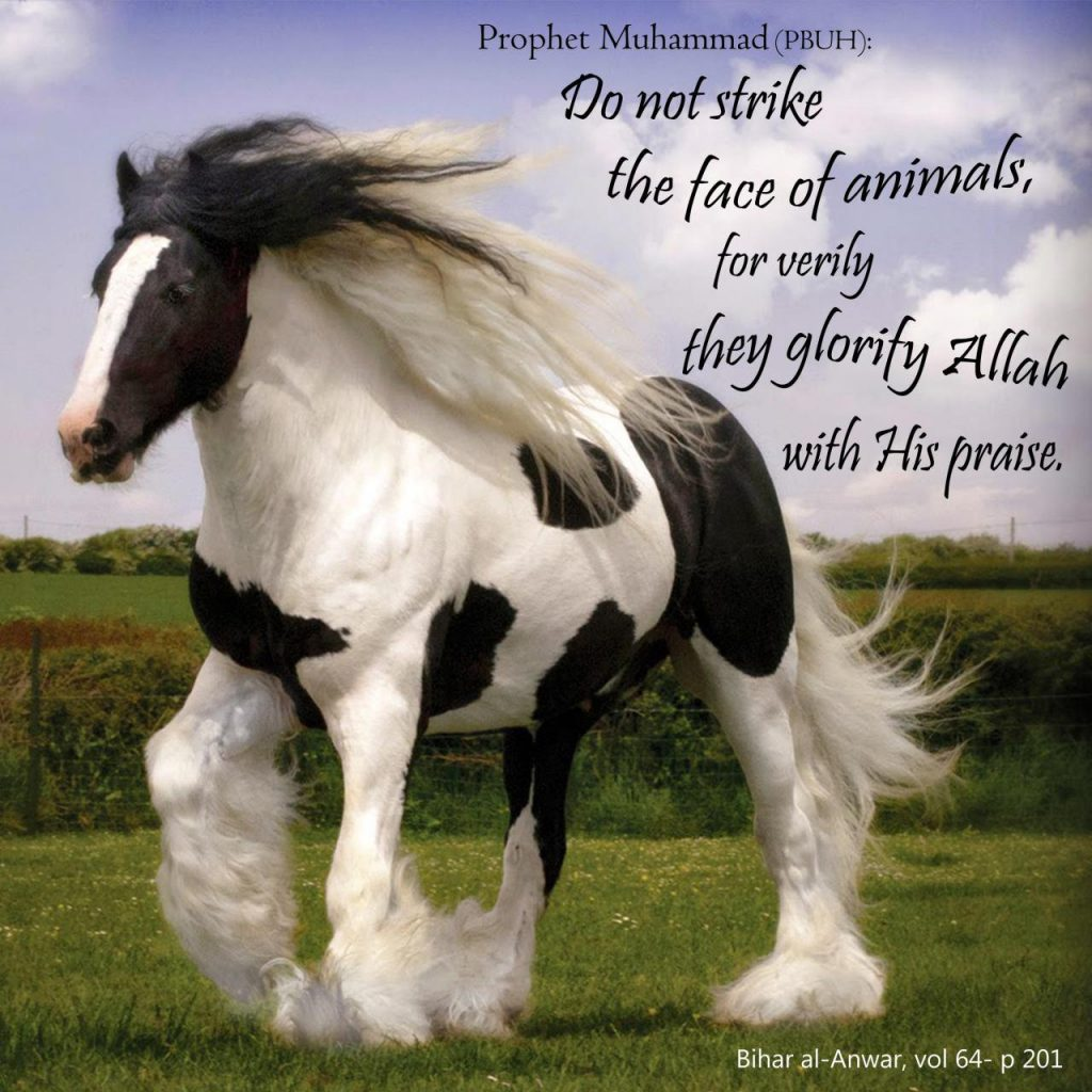 Do not strike the face of animals, for verily they glorify